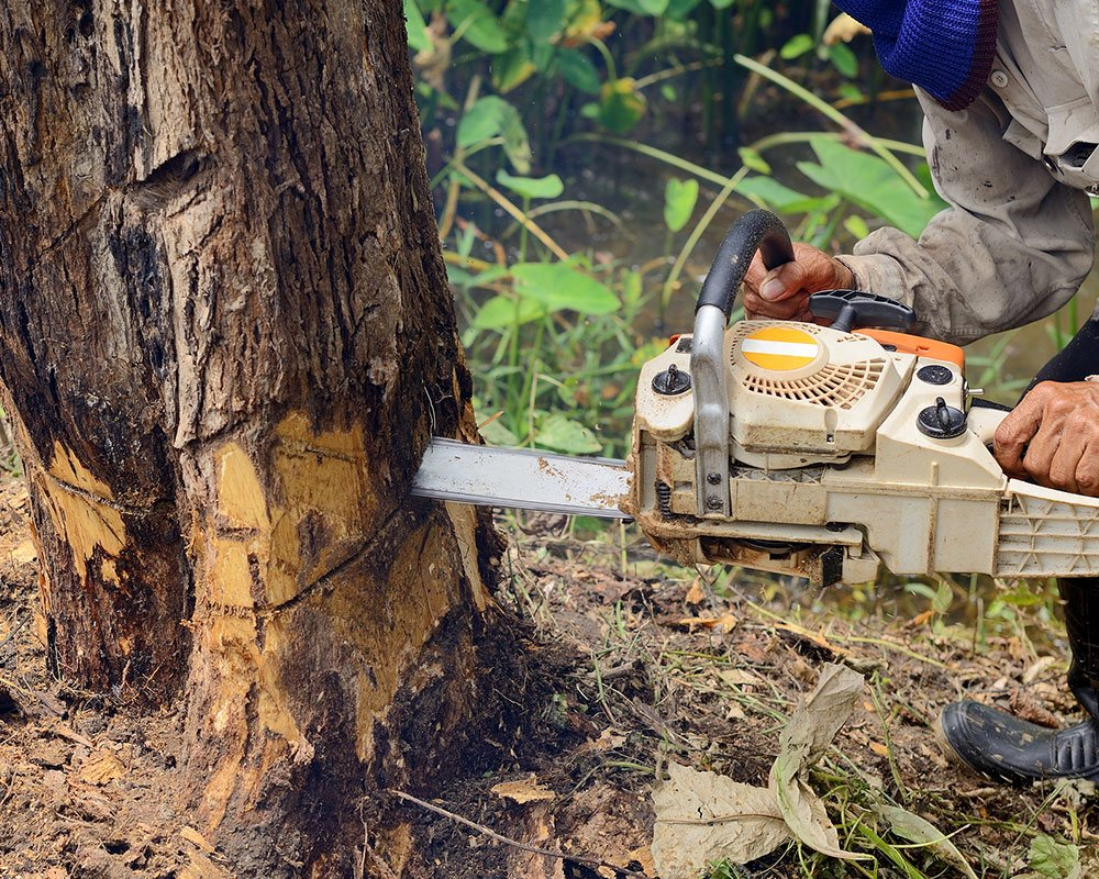 Franklin Tree Service Experts
