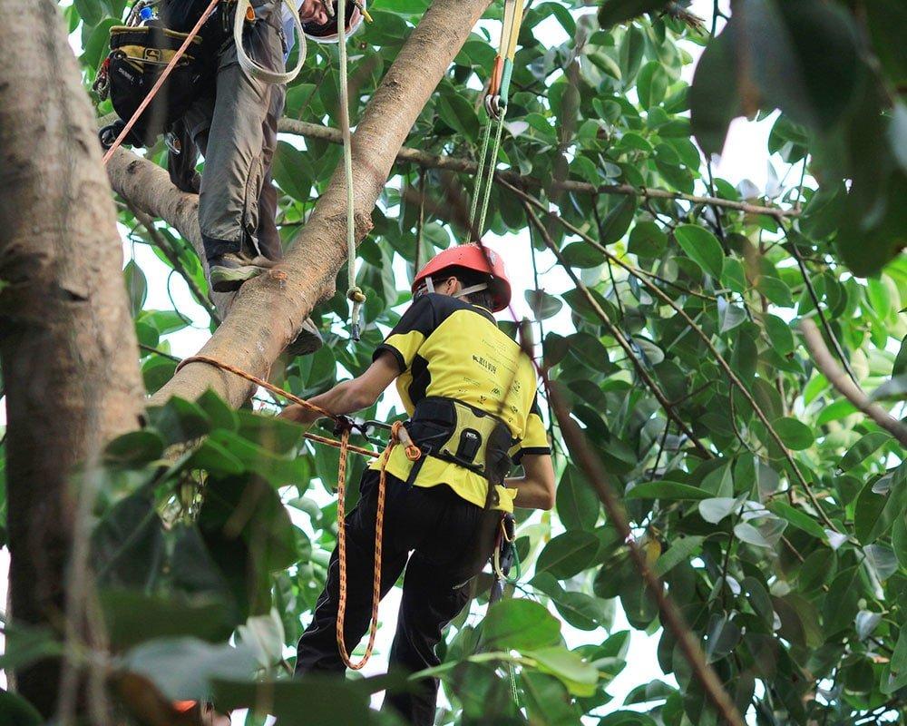 Nashville Tree Experts