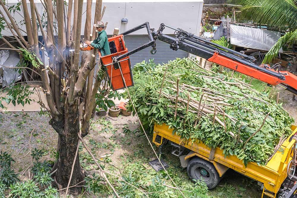 Tree Service Franklin - Tree Pruning