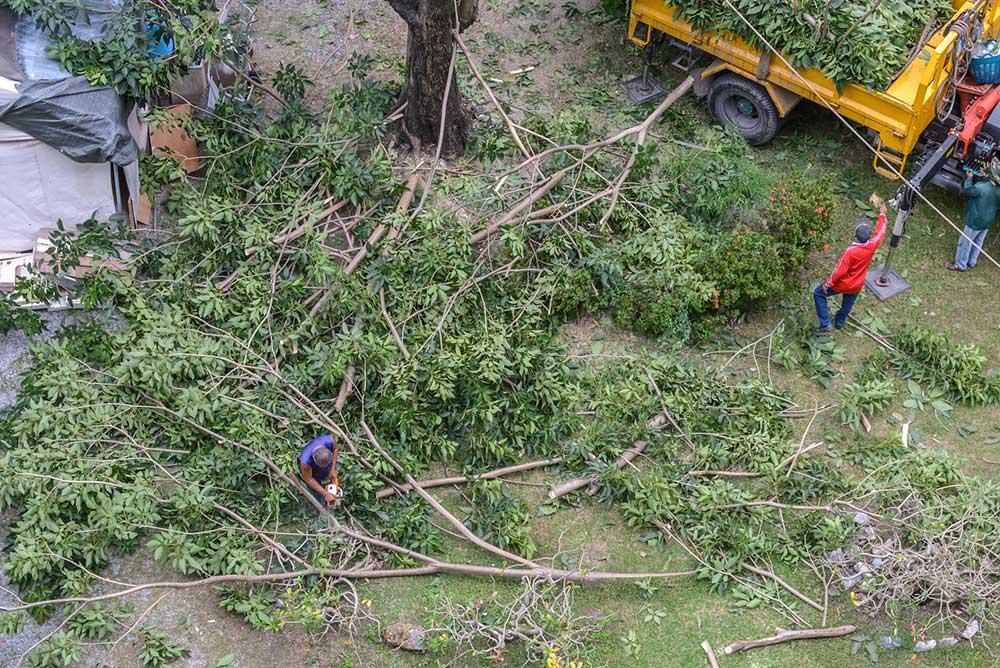 Tree Service Franklin - Tree Trimming
